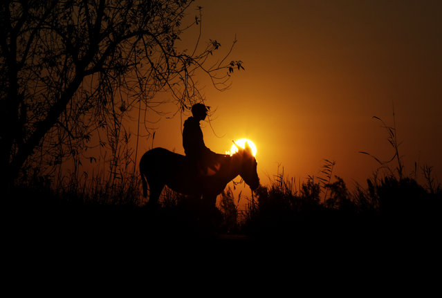 In this Friday, February 5, 2016 picture, the sun sets behind young Egyptian farmer, Ahmed Ayman, 14, and his trained donkey in the Nile Delta village of Al-Arid about 150 kilometers north of Cairo, Egypt. (Photo by Amr Nabil/AP Photo)