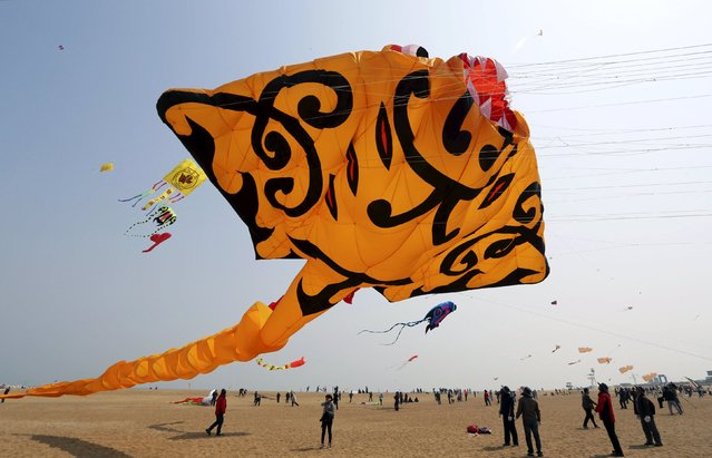 Participants try to fly a kite in the shape of a manta ray during a kite competition held in Weifang, Shandong Province April 11, 2015. A total of 85 teams with over 1000 kites took part in the competition on Saturday, local media reported. (Photo by Reuters/Stringer)