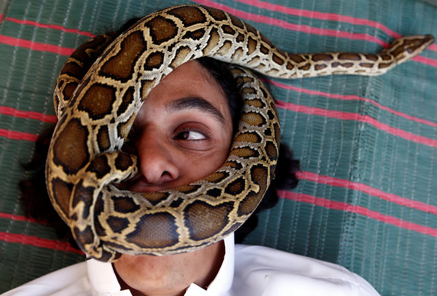 Palestinian man Nabeel Mussa, who keeps scorpions and snakes as a hobby and eats them, has his face surrounded by a snake at his house in Riyadh, Saudi Arabia January 17, 2017. (Photo by Faisal Al Nasser/Reuters)