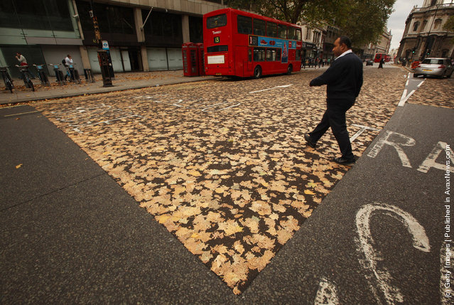 Autumn Leaves Trapped In Road Surface Following Late Summer Heatwave