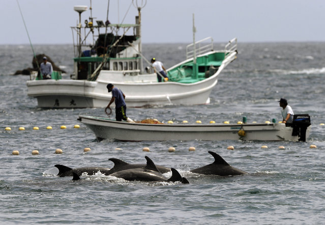 In this September 2, 2010, file photo, fishermen drive bottle-nose dolphins into a net during their annual hunt off Taiji, Wakayama Prefecture, Japan. A court in central Japan on Friday, May 17, 2019 is hearing arguments over whether dolphin hunting violates the nation's animal cruelty laws. (Photo by Kyodo News via AP Photo/File)