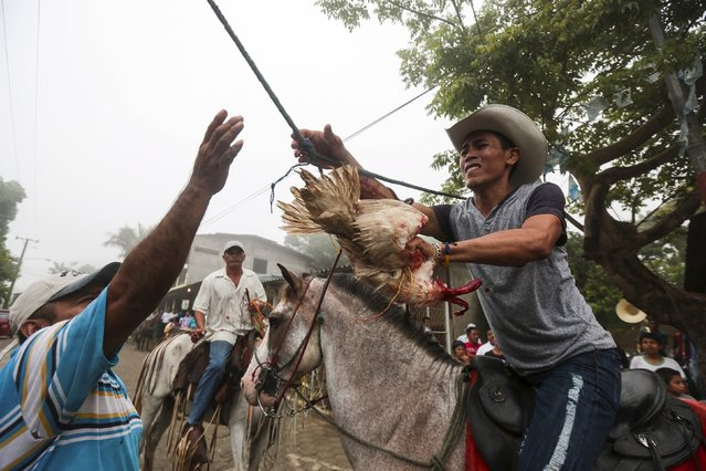 A man removes a decapitated rooster, after a rider pulled its head off in a rooster run, during celebrations in honour of San Juan Bautista in San Juan de Oriente town, Nicaragua, June 26, 2015. (Photo by Oswaldo Rivas/Reuters)