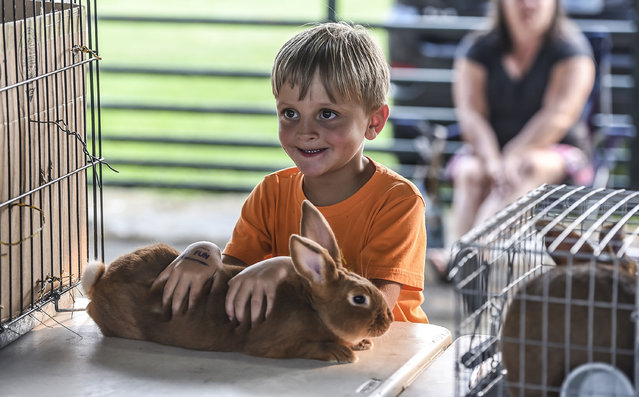 In this photo taken taken Tuesday, June 30, 2015, Henry Padgett, 5, from Waynesburg, Ky., holds onto Bulldozer, a Red New Zealand rabbit, during the 4-H/FFA & Youth Rabbit Show and Poultry Show in the Livestock Show Barn at the Lincoln County Fair near Stanford, Ky. (Photo by Clay Jackson/The Advocate-Messenger via AP Photo)