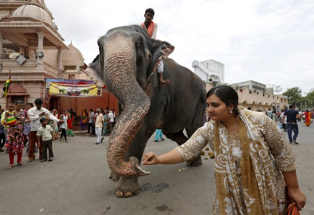 A Hindu woman gives money to an elephant outside the Lord Jagannath temple ahead of the annual Rath Yatra, or chariot procession, in Ahmedabad, India, July 16, 2015. The annual religious procession commemorates a journey by Hindu god Jagannath, his brother Balabhadra and sister Subhadra, in specially made chariots. The annual Rath Yatra is celebrated on July 18. (Photo by Amit Dave/Reuters)