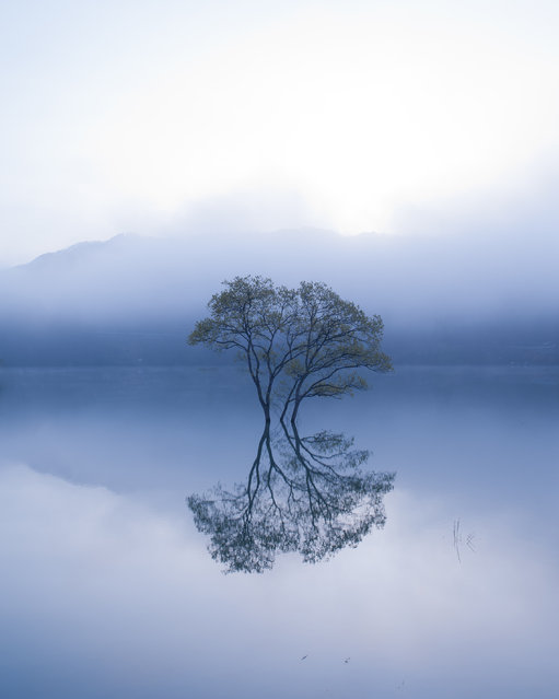 """Lonely tree"". It's a lonely tree's beautiful world. Photo location: Iide, Yamagata Pref., Japan. (Photo and caption by Teruo Araya/National Geographic Photo Contest)"