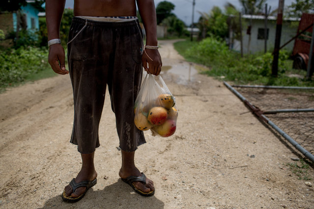 A teenager holds a bag of Mangos, a tropical fruit who grow up in threes in Caracas, Venezuela on June 22, 2016. The shortage of food especially in areas in extreme poverty had made Mangos the daily food. (Photo by Alejandro Cegarra/The Washington Post)