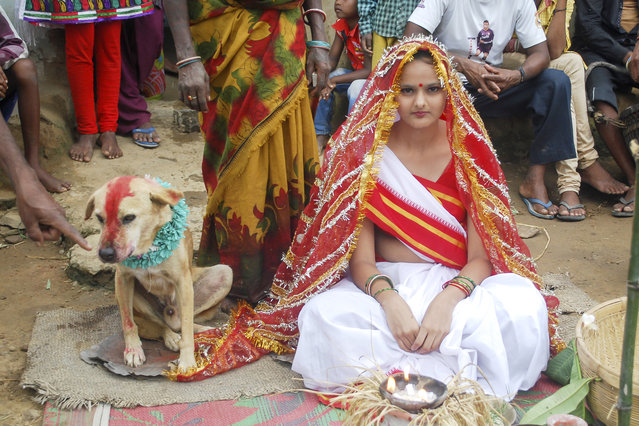 Mangli Munda poses on her wedding day with a stray dog in Jharkhand, India on August 30, 2014. An 18-year-old Indian girl has married a stray dog as a part of a tribal ritual designed to ward off an evil spell. (Photo by Barcroft Media/ABACAPress)