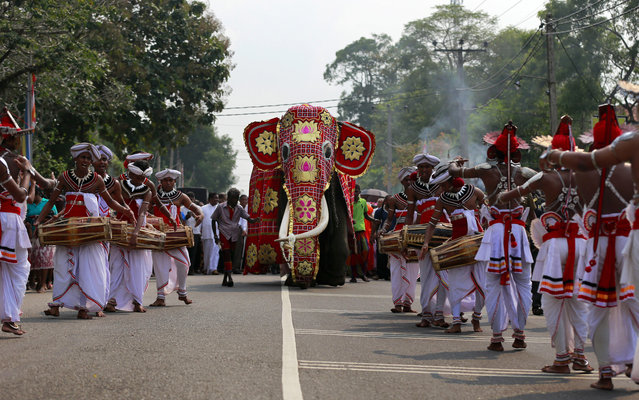 "In this October 20, 2016 file photo, Sri Lankan traditional dancers escort a tusker known as ""Nadungamuwe Tusker"", who is famous for carrying the sacred tooth relic of the temple of tooth during its annual procession, during a felicitation to the animal for his services to Buddhist temple processions in Kirindiwela village, outside Colombo, Sri Lanka. (Photo by Eranga Jayawardena/AP Photo)"