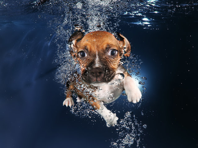 """Underwater Puppies"": Ava, Beagle Mix. (Photo by Seth Casteel)"