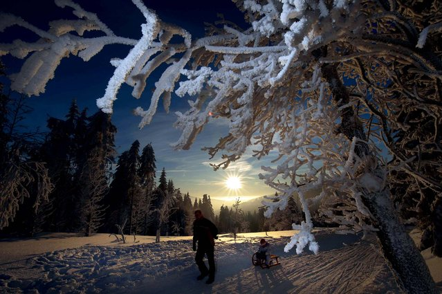 A man with a child on a sled walks past trees covered in snow and hoar frost on December 30, 2010 near Oberhof, Germany. (Photo by Robert Michael/AFP Photo)