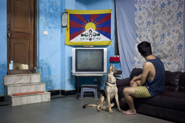 "In this Wednesday, October 15, 2014 photo, Tibetan exile Tsering, only one name given, sits with his pet dog in his room in New Delhi, India. Tsering escaped to India in 1997 when he was around 6 years old. Tsering says his mother cries when they speak on the phone and it makes his heart feels empty for several days. She still tells him not to go swimming or go trekking alone. ""For my mother I am still that six year old boy she sent away"", he said. (Photo by Tsering Topgyal/AP Photo)"