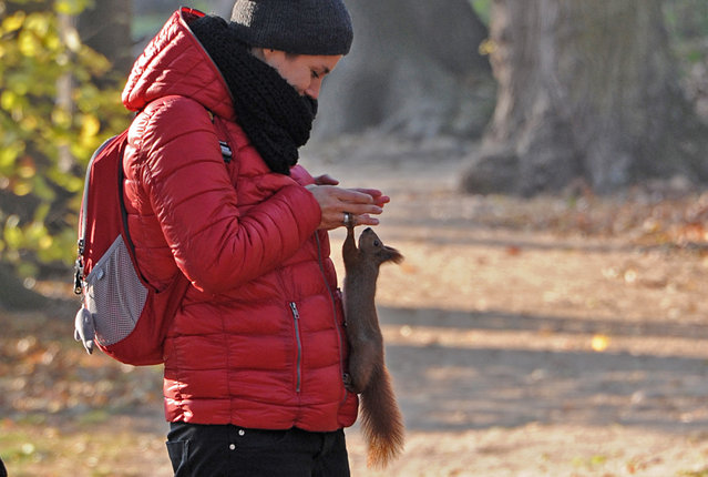 Monika tries to make a photo of a squirrel with her smartphone at the Lazienki park Warsaw, Poland, Tuesday, November 4, 2014, on a warm autumn day with temperatures reaching 16 degree Celsius (60.8 Fahrenheit). (Photo by Alik Keplicz/AP Photo)