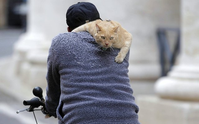 A man rides his bicycle with a cat on his shoulder next to Saint Peter's Square in Rome March 7, 2013. (Photo by Max Rossi/Reuters)