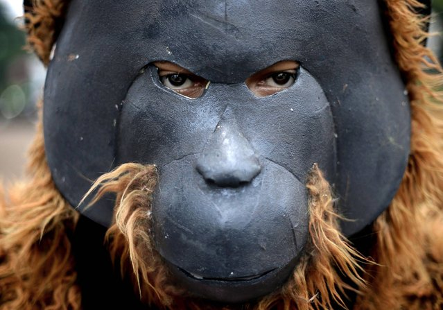 An activist dressed as orangutan takes part in a protest demanding that Indonesian President Susilo Bambang Yudhoyono to take immediate action to save orangutan outside the presidential palace in Jakarta, Indonesia, Thursday, March 14, 2013. Orangutan populations in Indonesia's Borneo and Sumatera island are facing severe threats from habitat loss, illegal logging, fires and poaching. (Photo by Dita Alangkara/AP Photo)