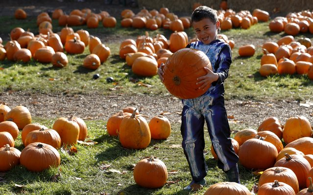 Five-year-old Kaden McArthur carries the largest pumpkin he can find in the pumpkin patch ahead of Halloween at Crockford Bridge Farm at Addlestone near Woking, southern Britain October 26, 2015. (Photo by Luke MacGregor/Reuters)