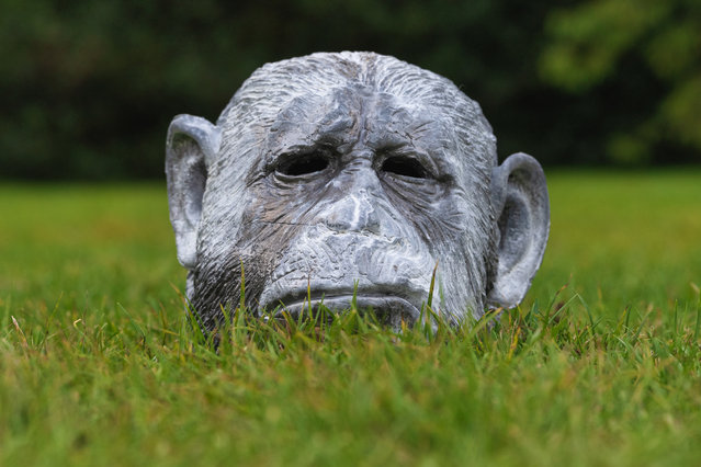 A primates head part of Patrick Goddards Humans-Animals-Monsters sculpture during the Frieze Sculpture 2020 exhibition at Regent's Park in London, United Kingdom on October 6, 2020. (Photo by Dave Rushen/SOPA Images/LightRocket via Getty Images)