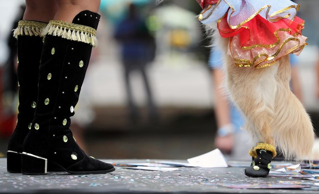 """A woman and her dog take part in the """"Blocao"""" or dog carnival parade during carnival festivities in Rio de Janeiro, Brazil, February 22, 2020. (Photo by Sergio Moraes/Reuters)"""