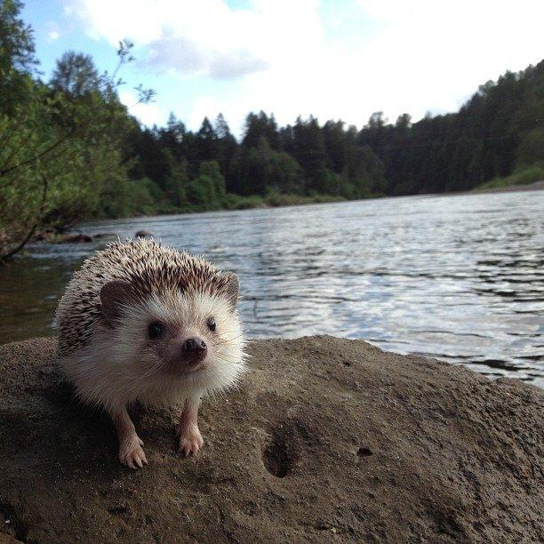 The Fantastic Adventures Of Biddy The Hedgehog