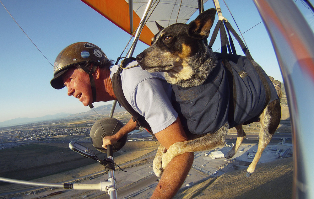 Flying With Man's Best Friend