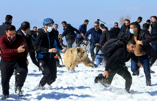People and security members run away as Kurdish animal rights activists release a bear into the wild after rescuing bears from captivity in people homes, in Dohuk, Iraq on February 11, 2021. (Photo by Ari Jalal/Reuters)