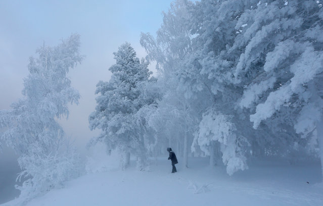 A woman walks amidst trees covered with hoarfrost and snow in a forest on the bank of the Yenisei River, with the air temperature at about minus 32 degrees Celsius (minus 25.6 degrees Fahrenheit), near the Siberian city of Krasnoyarsk, Russia December 6, 2018. (Photo by Ilya Naymushin/Reuters)