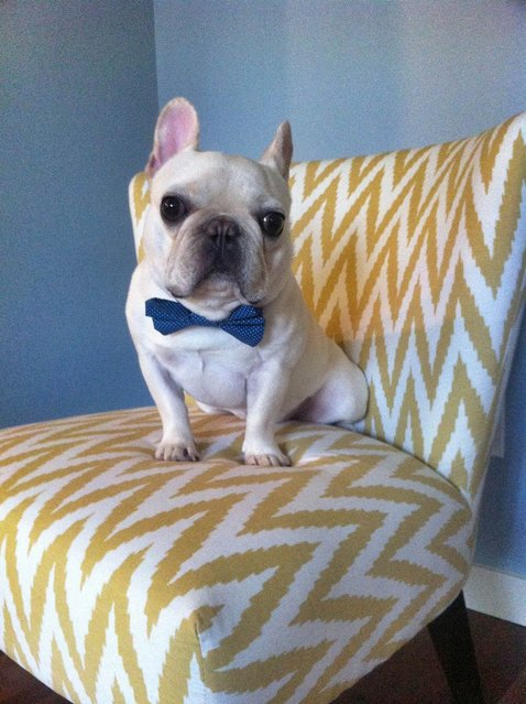 Sir Charles Berkley dressed to impress in his bow tie . (Photo by Caters News)