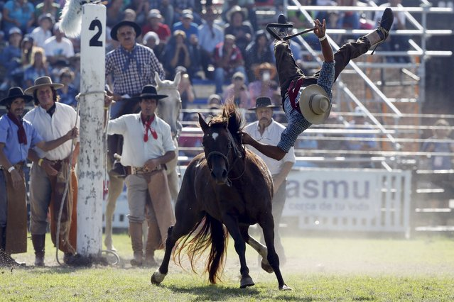 A gaucho is unseated by an unbroken or untamed horse during Creole week celebrations in Montevideo, March 23, 2016. All Easter week gauchos all over Uruguay and neighboring Argentina and Brazil come to Montevideo to compete for the award of best rider. (Photo by Andres Stapff/Reuters)