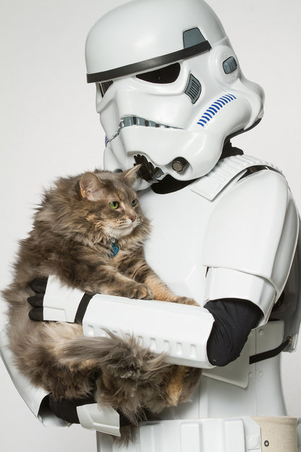 A Storm Trooper with a cat. (Photo by Rohit Saxena/Caters News)