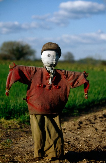 """It is always a great thrill to approach a new scarecrow. Will it have a face? Will it be sinister, happy, sad, aggressive, fiendish, stupid or just a friendly fool? It is well known that some of the most carefully made scarecrows are stolen, vanishing in the night"". (Photo by Colin Garratt)"