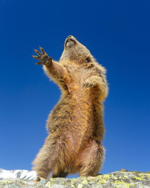 """Dancing... yeah!"". (Photo by Martina Gebert/Comedy Wildlife Photo Awards 2019)"