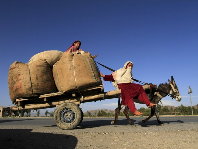 Girls ride on a donkey cart with grass for animals on the outside of Nangarhar province, Afghanistan May 19, 2015. (Photo by Reuters/Parwiz)