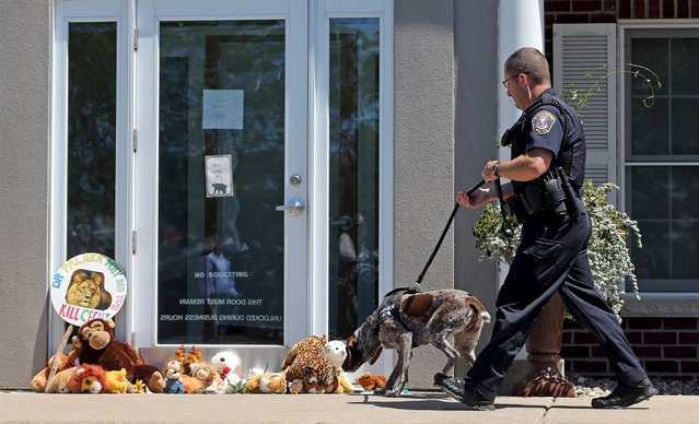 A K-9 Unit Bloomington Police dog sniffs at stuffed animals blocking the doorway of River Bluff Dental clinic in protest against the killing of a famous lion in Zimbabwe, in Bloomington, Minnesota July 29, 2015. (Photo by Eric Miller/Reuters)