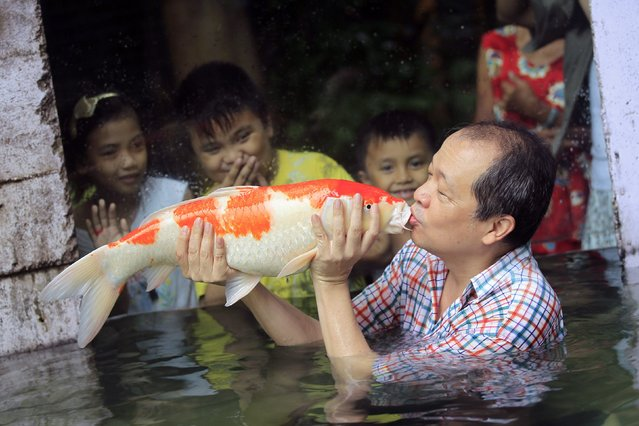 "Zoo owner Manny Tangco gives a kiss to a giant Japanese Koi carp while children watch, as part of the zoo's newest attraction dubbed ""The World of Kois"", in Malabon city, north of Manila August 22, 2014. (Photo by Romeo Ranoco/Reuters)"