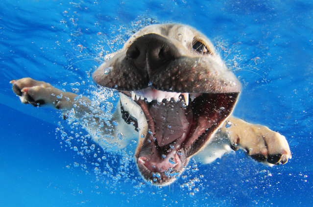 """Underwater Puppies"": Reason. (Photo by Seth Casteel)"
