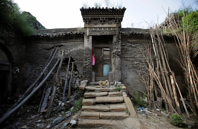 Tree trunks and rocks are set up to support a leaning wall of Li Yonghua's damaged cave house in an area where land is sinking next to a coal mine, in Helin village of Xiaoyi, China's Shanxi province, August 2, 2016. (Photo by Jason Lee/Reuters)