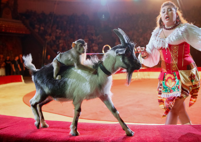 """A goat and a monkey perform during the presentation of the new show """"The extreme arena"""" at the National Circus in Kiev, Ukraine, September 15, 2016. (Photo by Gleb Garanich/Reuters)"""