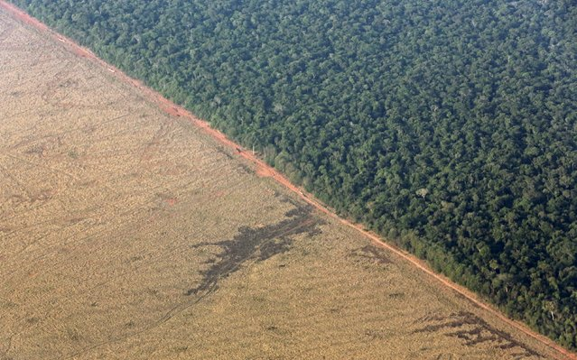 An aerial view shows an area of land cleared for the preparation of pasture which borders with the Amazon rainforest in Mato Grosso state, western Brazil, October 4, 2015. (Photo by Paulo Whitaker/Reuters)