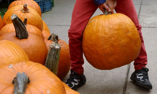 A boy lifts a pumpkin, out of some 400 different kinds grown this season on display, at Franzlbauer farm in Hintersdorf, Austria, October 27, 2015. (Photo by Heinz-Peter Bader/Reuters)