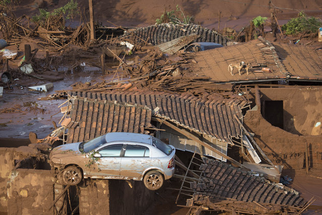 A car and two dogs are seen on the roof of destroyed houses at the small town of Bento Rodrigues after a dam burst on Thursday in Minas Gerais state, Brazil, Friday, November 6, 2015. (Photo by Felipe Dana/AP Photo)