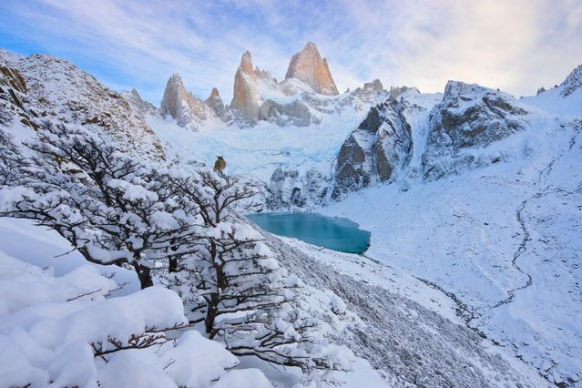 Jagged peace by Floris van Breugel. Finalist, Land. A small bird (Gaucho Serrano) contemplates the enormity of Fitz Roy, in Patagonia, in Argentina's Los Glaciares national park – a world heritage site – that boasts the largest ice mantle outside Antarctica, with numerous glaciers, lakes and towering mountains. Mount Fitz Roy is the highest, rising a jagged 3,375 metres (11,000 feet) above sea level. (Photo by Floris van Breugel/Wildlife Photographer of the Year 2015)
