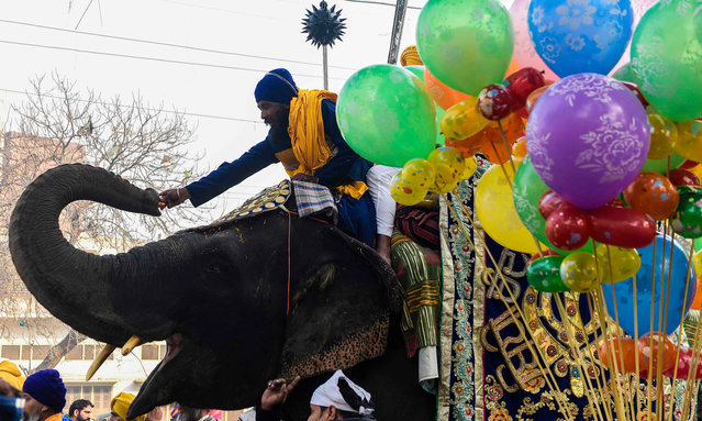 """Sikh Nihang (Sikh warriors) gives a biscuit packet to his elephant during the """"Nagar Kirtan"""" procession to mark the 339th birth anniversary of the Sikh warrior Shaheed Baba Deep Singh, in Amritsar on January 31, 2021. (Photo by Narinder Nanu/AFP Photo)"""