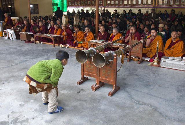 A child bends to take a closer look at ceremonial horns blown by exile Tibetan Buddhist monks during a special morning prayer on the third day of the Tibetan new year in Dharmsala, India, Saturday, February 21, 2015. Losar, or Tibetan New Year, was marked on Feb. 19. (Photo by Ashwini Bhatia/AP Photo)