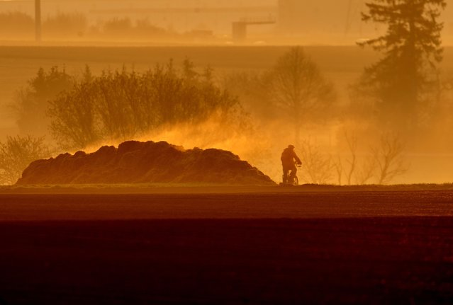 A man rides his bike past a steaming dunghill as the sun rises in Frankfurt, Germany, Tuesday, April 20, 2021. (Photo by Michael Probst/AP Photo)