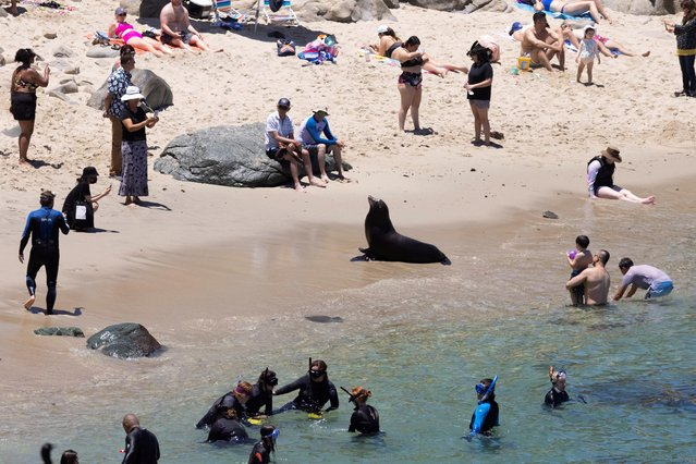 People visiting the beach look at a sea lion as tourism makes a comeback during the outbreak of the coronavirus disease (COVID-19) in La Jolla, California, U.S., June 10, 2021. (Photo by Mike Blake/Reuters)