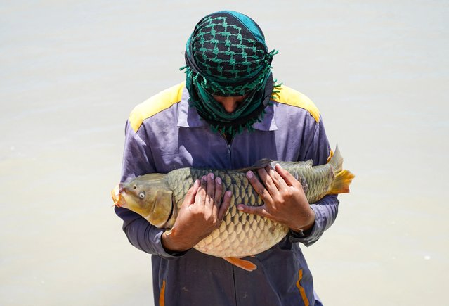 A worker carries a carp freshwater fish at a breeding site in Iraq's central city of Najaf, on June 13, 2021. (Photo by Ali Najafi/AFP Photo)