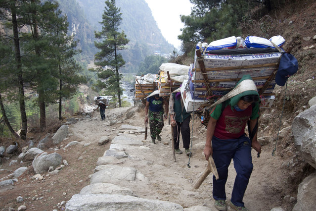 In this Tuesday, March 24, 2015, porters with supplies for trekkers head towards Namche, in Zamphute, a village inhabited by mainly Sherpas, Nepal. (Photo by Tashi Sherpa/AP Photo)