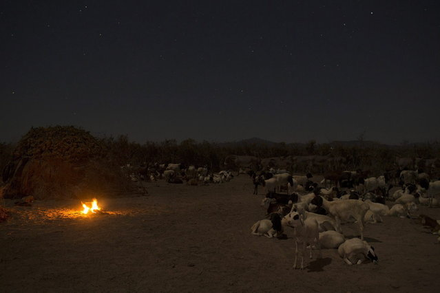 Livestock is seen inside a Turkana cattle kraal, as food is cooked on a fire, in the disputed area of the Ilemi triangle in northwestern Kenya near the borders with Ethiopia and South Sudan October 14, 2013. (Photo by Siegfried Modola/Reuters)