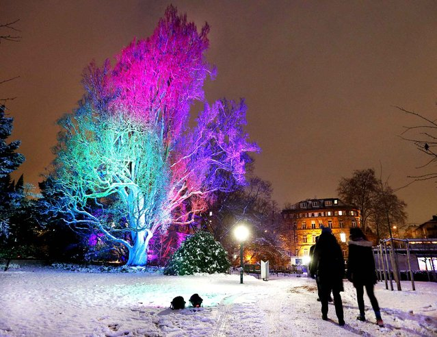 People pass by an illuminated big tree in the Palmengarten Park in Frankfurt, Germany, Tuesday, January 10, 2017. (Photo by Michael Probst/AP Photo)