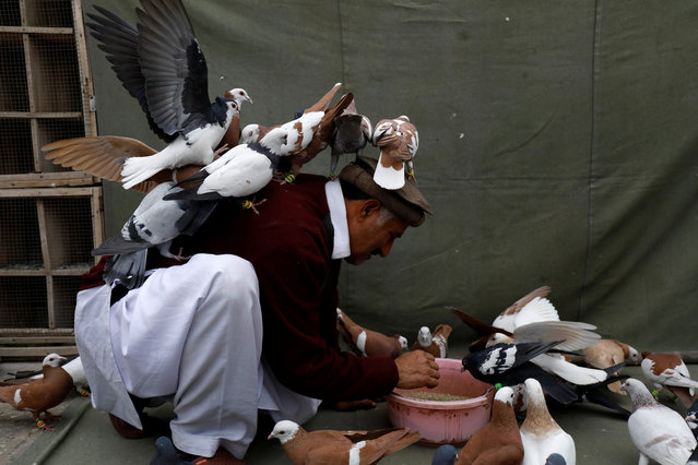 Jahnzeb, a pigeon breeder sits amid his flock as he feeds them on a rooftop in Peshawar, Pakistan January 10, 2019. (Photo by Fayaz Aziz/Reuters)