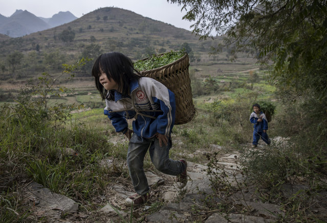 """Left behind"" children Luo Hongni, 11 (L) and brother  Luo Gan,10, carry flowers to be used as feed while doing chores in the fields on December 18, 2016 in Anshun, China. (Photo by Kevin Frayer/Getty Images)"